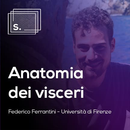 Federico Anatomia